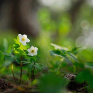 20 savjeta da se riješite proljetnog umora