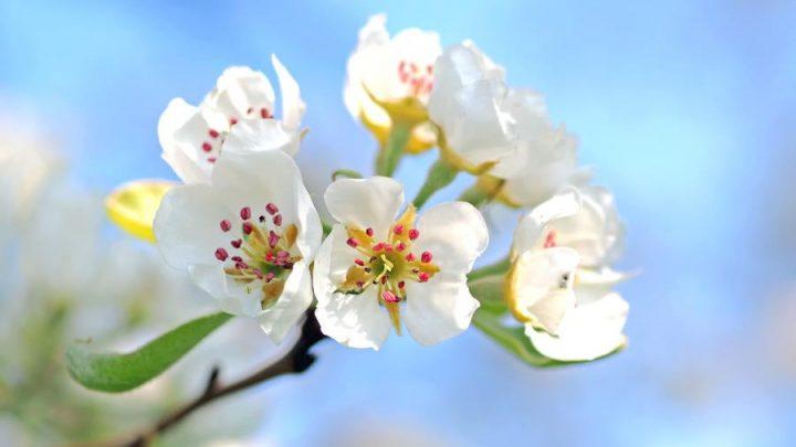 40 stvari koje možete raditi ovog proljeća