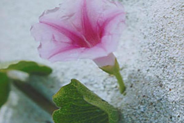 30 savjeta za dostojanstven život i osobni dignitet